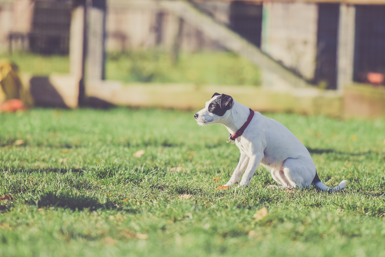 Best Anti Bar Collars For An Obedient Dog