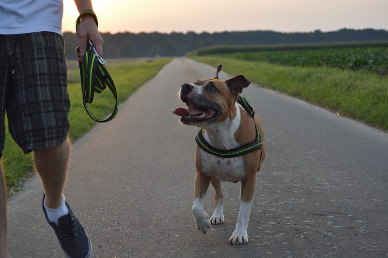 10 Best Dog Food For Pitbulls in 2021