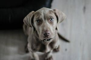 Dog looking up at camera