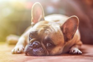 Probiotics for your Dogs gut health