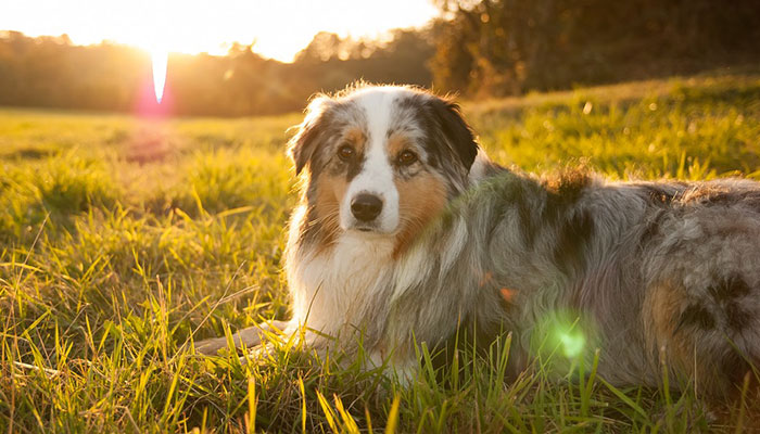 What Dog Vitamins for Skin Problems?