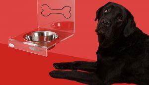 Dog Food for Skin Allergies