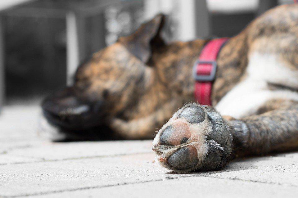 Dog Nail Sanding