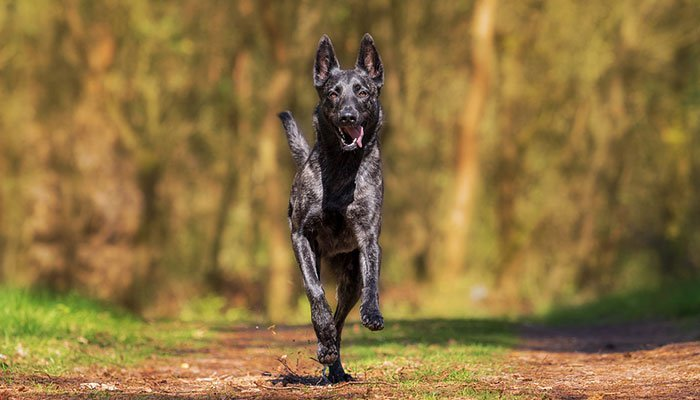 What are the Finest Dog Vitamins for Joints?