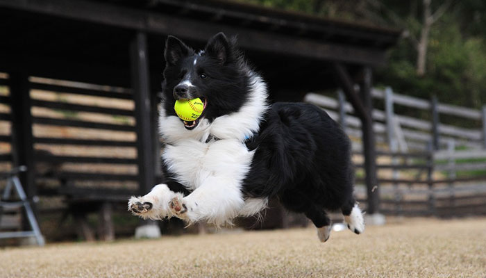 What Variations of Dog Supplements are there?