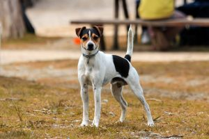 What Dog Supps for Skin Allergy
