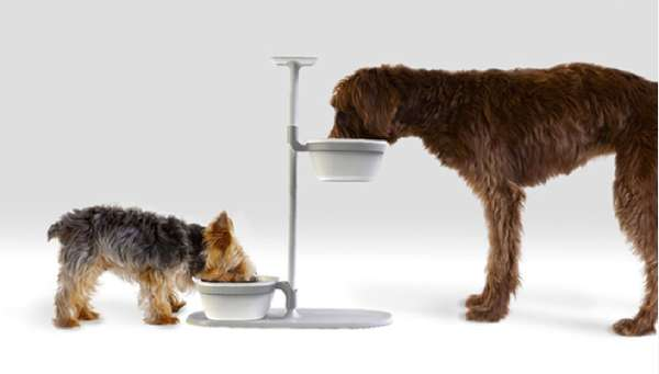 Pet Plate Review (2021)