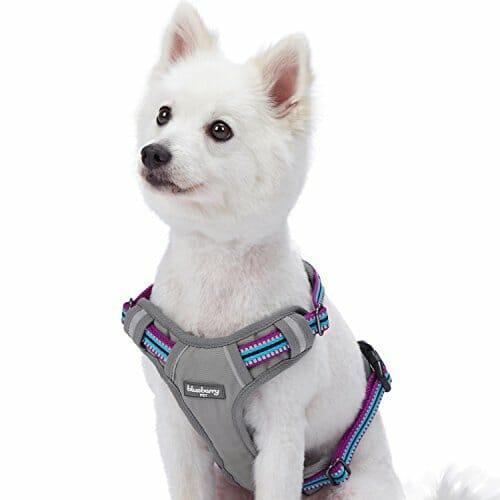 Blueberry Pet Reflective harness