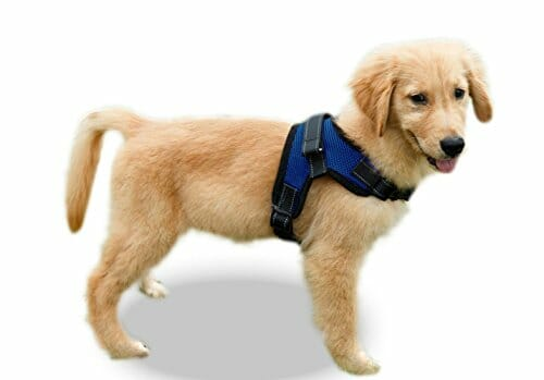 Puppy training copatchy reflective harness