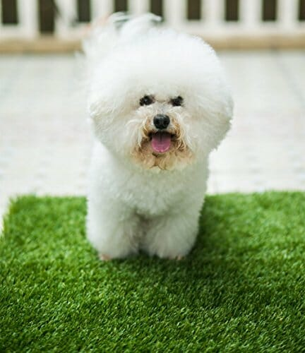 dog on synthetic grass