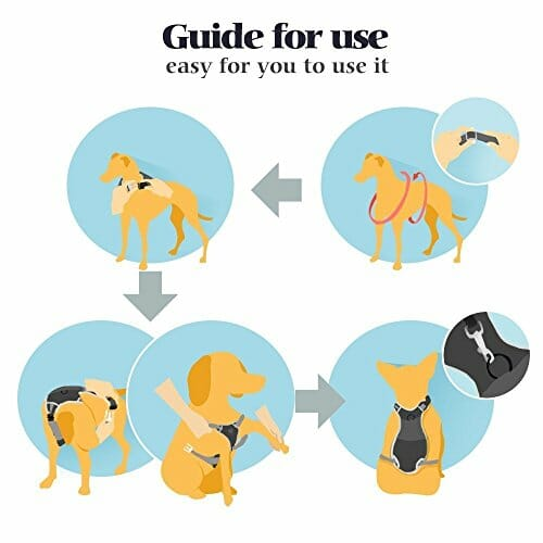 dog harness guide