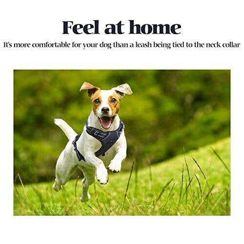 RABBITGOO adjustable dog harness