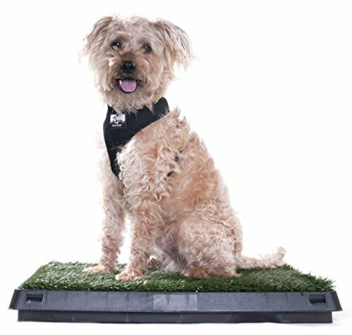 Dog sitting on artificial turf