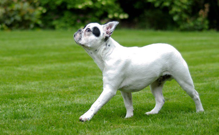12 Best Grass Turfs For Dogs in 2021
