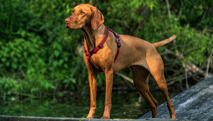 10 Best Harnesses For Dogs in 2021