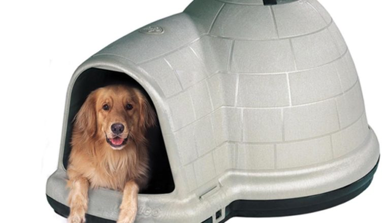 10 Best Igloo Dog Houses & Beds in 2021