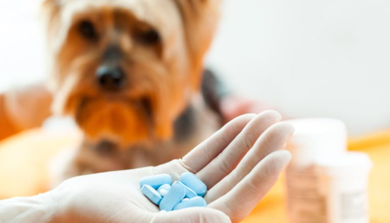 10 Best Dog Dewormers in 2021