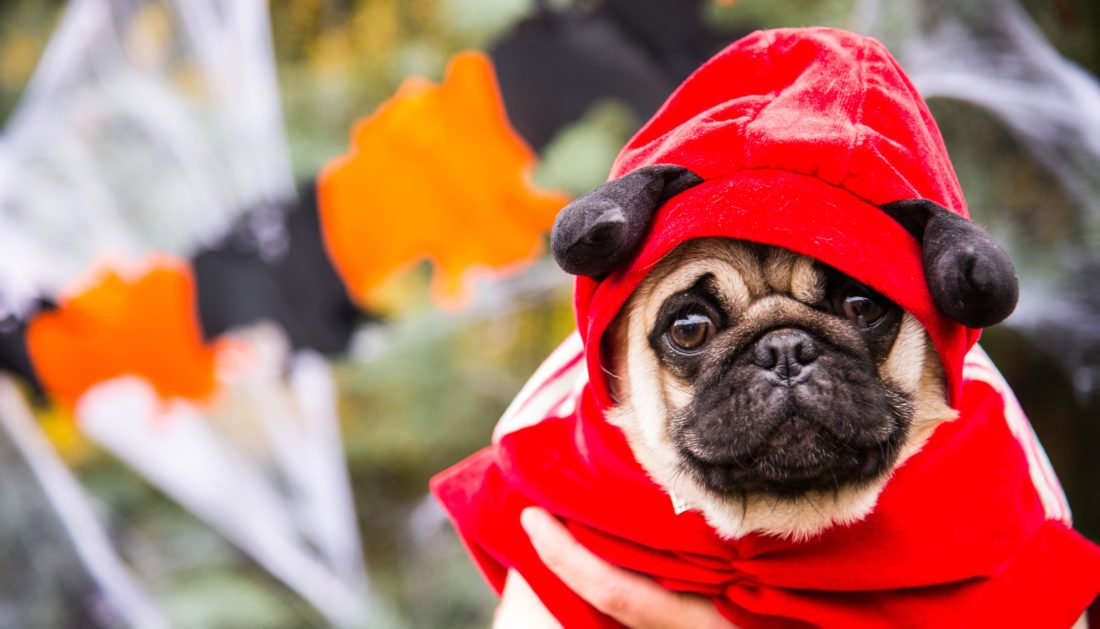 Halloween Dog Costume Review