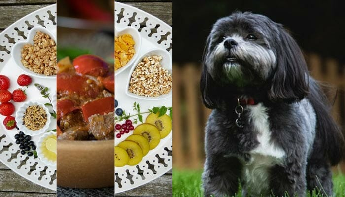 A Buyer's Guide to Dog Food for Shih Tzus