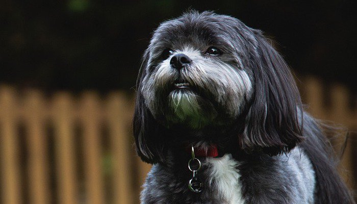 10 Best Dog Food for Shih Tzus in 2021