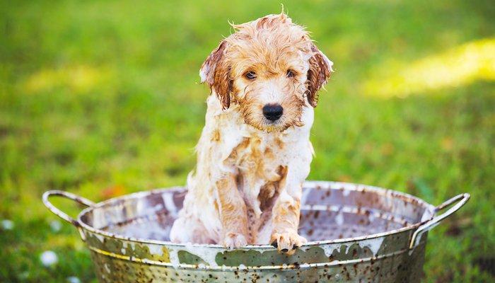 10 Best Puppy Shampoos in 2021