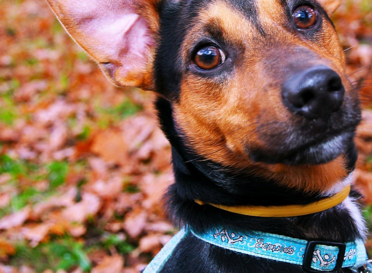 How Dog Collars Are The Hidden Cause Behind Injuries