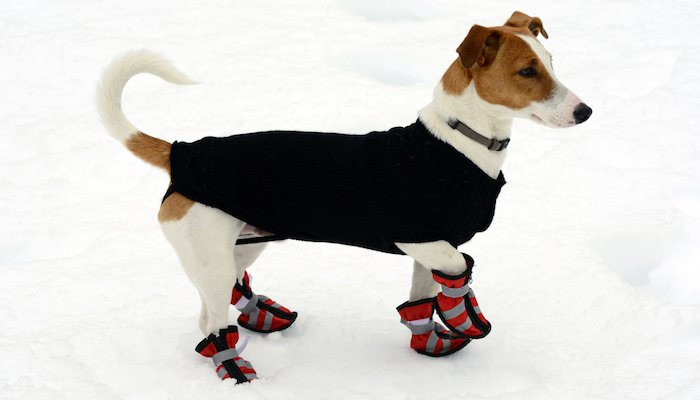 10 Best Dog Boots in 2021