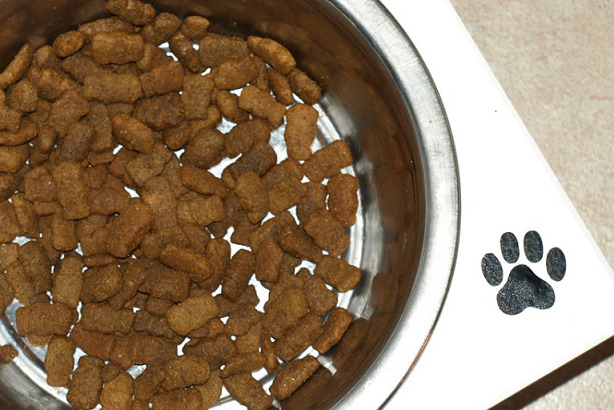 13 Health Benefits Of Elevated Dog Bowls