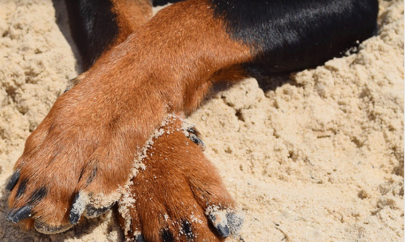 dog-crosses-its-feet-in-the-sand