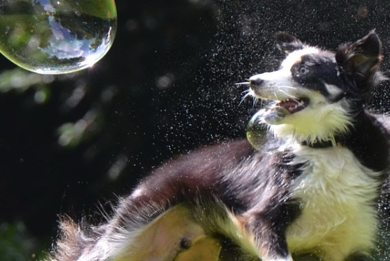 dog-jumping-and-chasing-the-giant-bubble