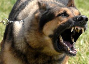 dog-on-leash-angrily-barking-at-something