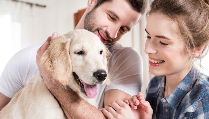 Melatonin for Dogs Ultimate Guide