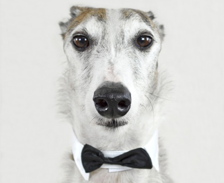 Dog Collar Buyer's Guide and Tips