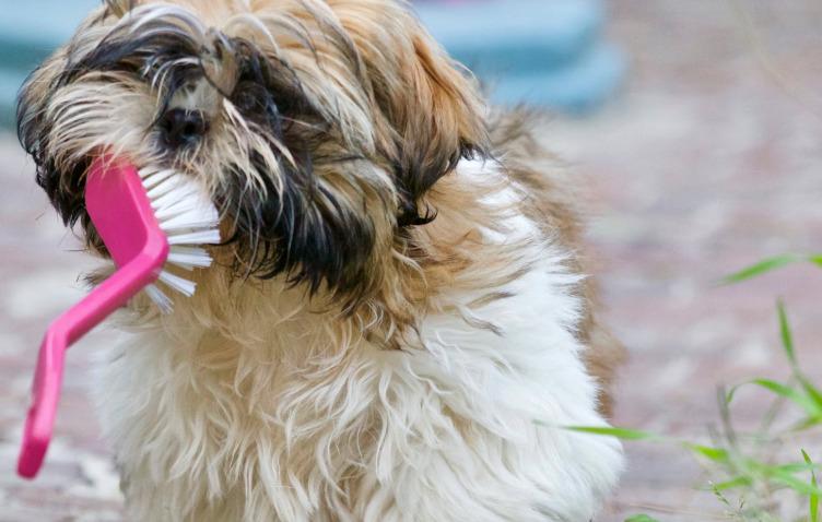 7 Tips For Doggie Dental Care
