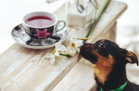 11 Facts On Hemp Oil For Dogs You May Not Know About
