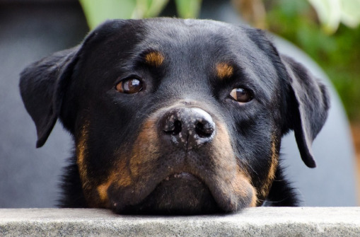10 Easy Steps to Treat Separation Anxiety in Dogs