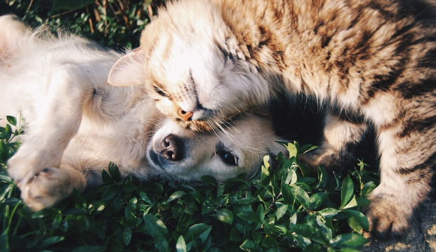 How to Give Your Dog or Cat a Flea Bath