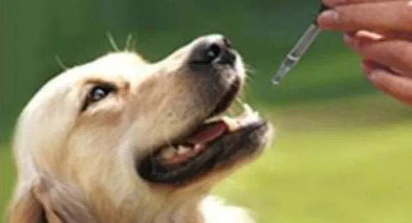 How Much CBD Oil Should I Give My Dog?