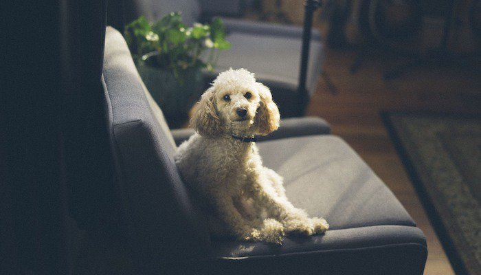 8 Best Couches for Dogs in 2021