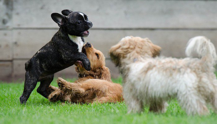 CBD Oil for Dogs in the UK