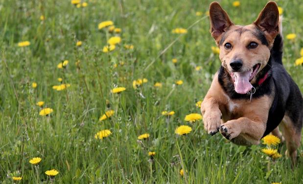 Best Metacam Alternatives for Dogs – 5 Safer Pain Medications
