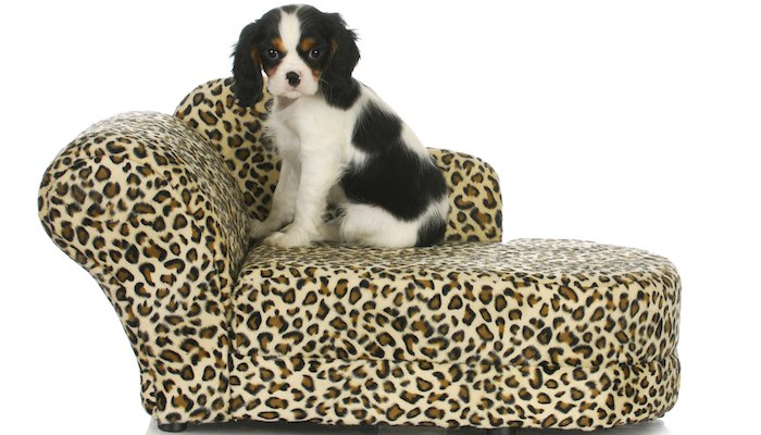 10 Best Elevated Dog Beds in 2021