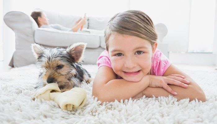 6 Best Flea Powders For Carpets in 2021