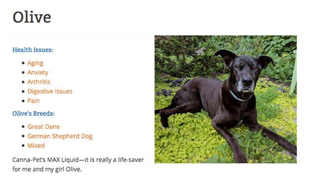 olive dog card