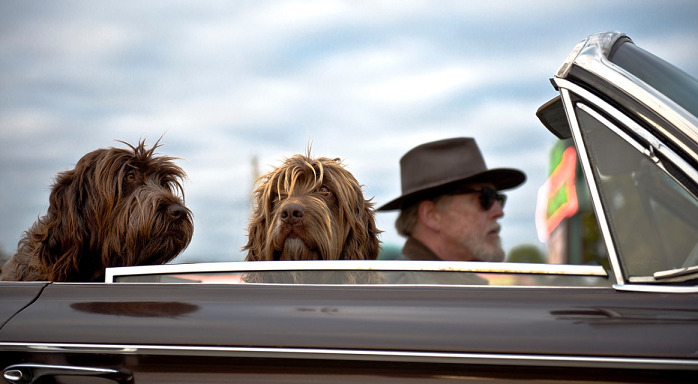 5 Steps To Treat Car Anxiety in Dogs