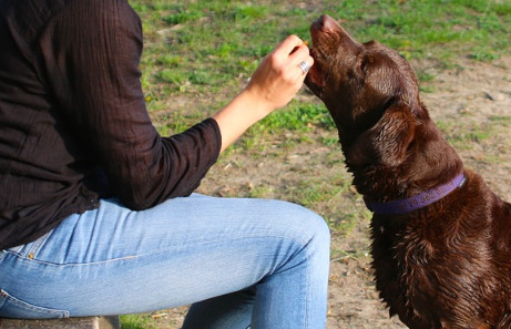 What to Feed Your Dog – Cheap, Healthy Dog Food Brands & Recipes