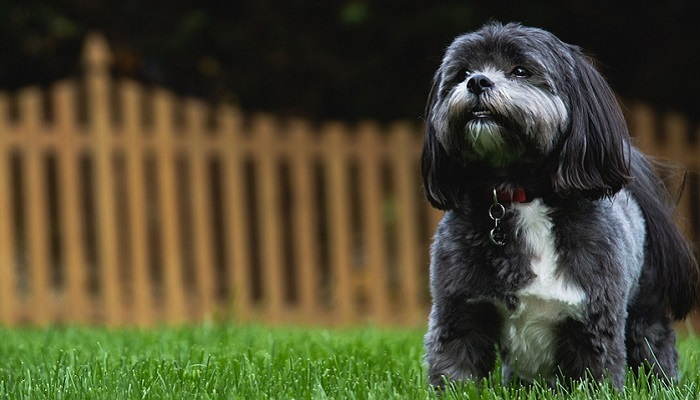 Shih Tzu Diet: 8 Common Mistakes Dog Owners Make