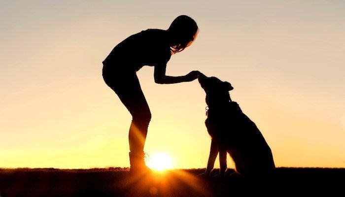 9 Best CBD Dog Treats in 2021