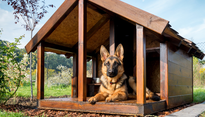 10 Best Dog Houses in 2021