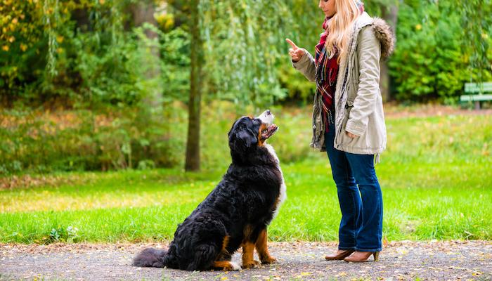 Best Ways to Train Dogs